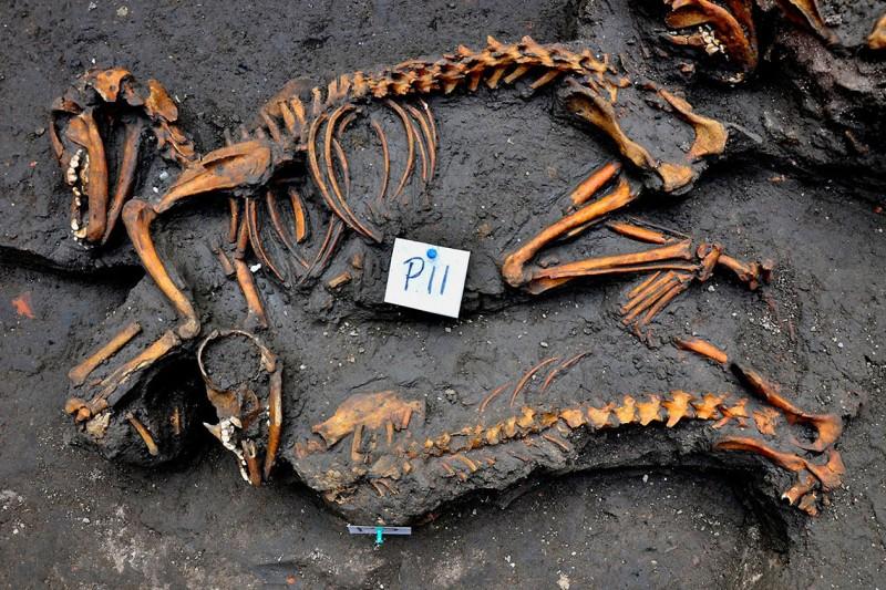 Aztacapozalco-dog-burial.jpg