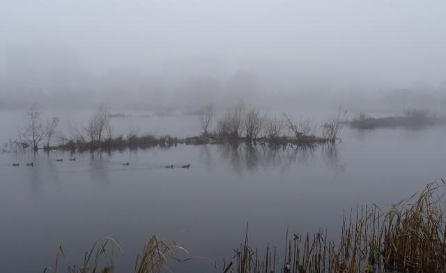 Утки в тумане