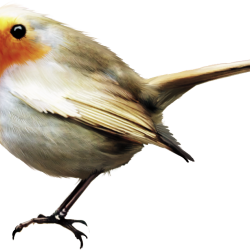 ldavi-feathersandmittens-littlerobin1.th.png