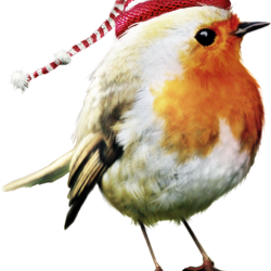 ldavi-feathersandmittens-littlerobin3.th.png