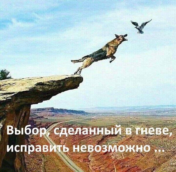 VYBOR-SDELANNYI-V-GNEVE-ISPRAVIT-NEVOZMOZNO-....jpg