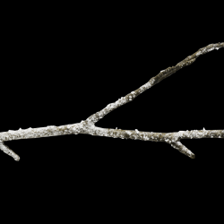 mfisher-twig1-sh.th.png