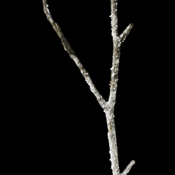 mfisher-twig1a-sh.th.png