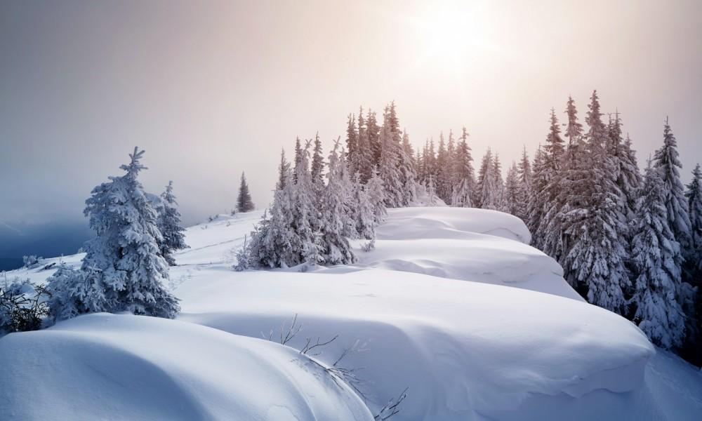 zima-sneg-sugroby-derevya-eli.jpg
